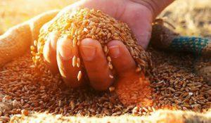 Sustainable Food 2019